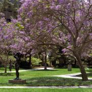 Murphy Sculpture Garden