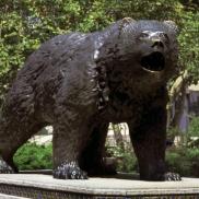 UCLA Bear