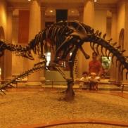 losangelesnaturalhistorymuseum